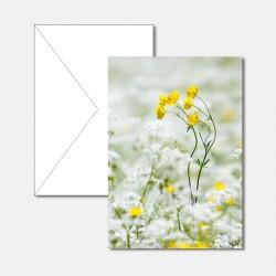 Gelbe und weisse Blumen