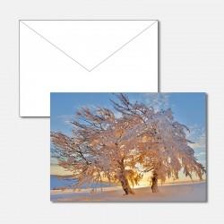 Winterbaum im Abendlicht