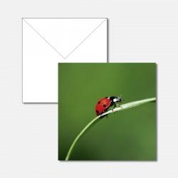 Ein Marienkäfer auf Grashalm