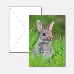 Hase silber
