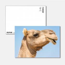 Hallo Kamel
