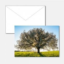 Kirschbaum im Sonnenaufgang
