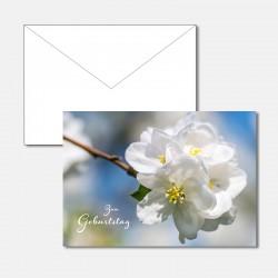 Kirschblühte - zum Geburtstag
