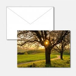 Kirschbaum im Abendlicht