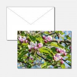 Blick zu den Apfelblüten