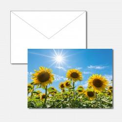 Sonnenblumen mit Gegenlicht