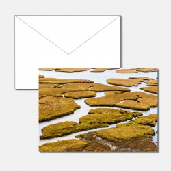 Sumpflandschaft Salt Marsh...