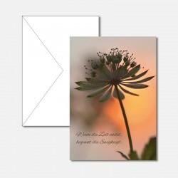 Trauerkarte Blume im...