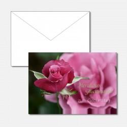 Pinkfarbene Rose