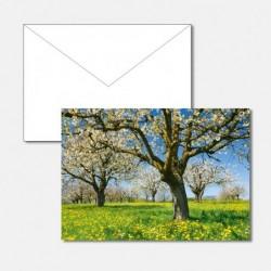 Frühling Kirschbäume