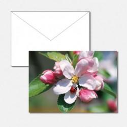 Frühling Apfelblüte