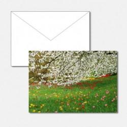 Frühling Tulpen Baum