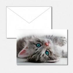 Tiere Kitten Blue Eyes