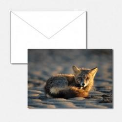 Tiere junger Fuchs