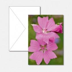 Sommer-Flora 3