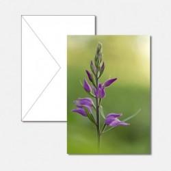 Frühling Blume