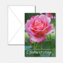 Rosen Glückwunsch Geburtstag