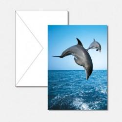 Tiere Delfine