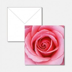 Edelrose pink