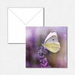Schmetterling Special Edition