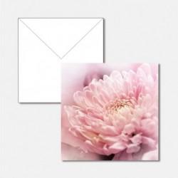 Blume blanco Special Edition
