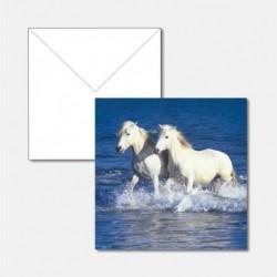 Tiere Pferde im Meer