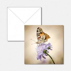 Tiere Schmetterling