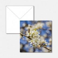 Frühling Apfelblüten mit Wespe