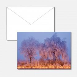 Bäume im Kerzenmeer