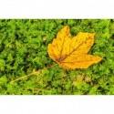 Herbstblatt im grünen Moos