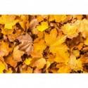 Herbstblätter am Boden