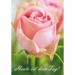 Rose - heute ist dein Tag