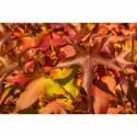 Weinblätter in den Herbstfarben