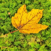 🍁🍂 Für Meteorologen beginnt der Herbst bereits am 1. September. Der kalendarische bzw. astronomische Herbst beginnt in diesem Jahr hingegen erst am 22. September – um 15.31 Uhr mitteleuropäischer Zeit. Dann ist die Nacht genauso lang wie der Tag. 🍂🍁  Freust du dich auf den Herbst? Im Shop naturverlag.ch findest du eine grosse Auswahl an schönen Herbstkarten. 🥰 . . . . .  #naturverlag #grusskarte #karte #naturfoto #natur #nature #spätsommer #herbst #laub #fall #autumn #fall #thomasheitmar #thomasheitmarfotografie #nicetoknow