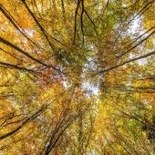 """🙂 """"Um klar zu sehen, genügt oft ein Wechsel der Blickrichtung."""" 🙃 Antoine de Saint-Exupéry . . . . . #naturverlag #grusskarte #karte #naturfoto #natur #nature #spätsommer #herbst #laub #fall #autumn #fall #thomasheitmar #thomasheitmarfotografie #zitat #quotes #quoteoftheday"""